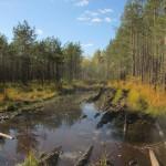 Дорога через болото Ягодное