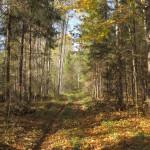 Дорога Елфимово-Зубово