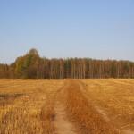 Золотистое поле у Кузнечихи