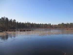 Свежий лед